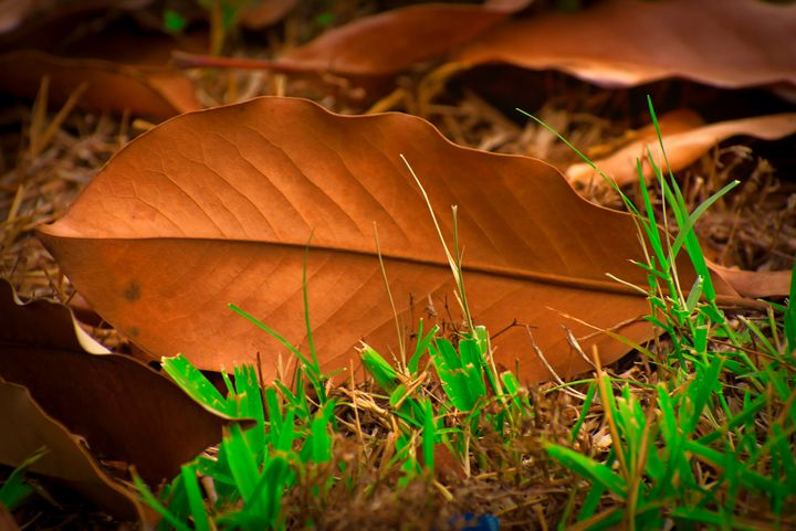 The Leaf - Robert Brown Photography