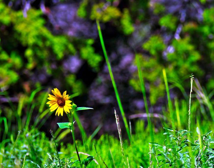 Little Flower - Robert Brown Photography