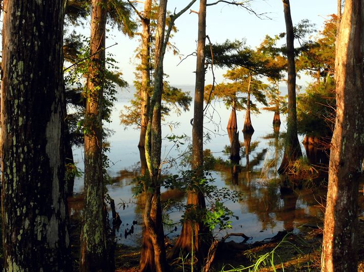 swamps and bay - Robert Brown Photography