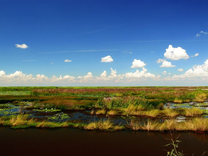 The marshes of Anahuac wildlife rese - Robert Brown Photography