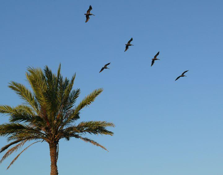 Palm Tree - Robert Brown Photography