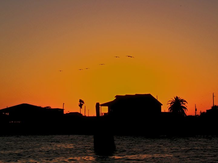 silhouette  of beach homes - Robert Brown Photography