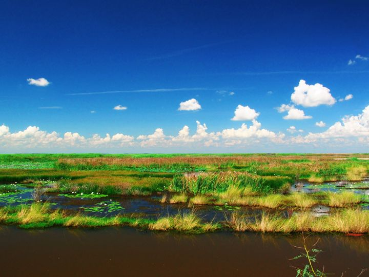 Marshes of Anahuac - Robert Brown Photography