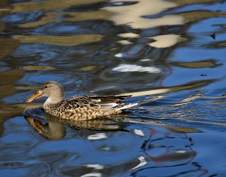 Evening Swim - Robert Brown Photography