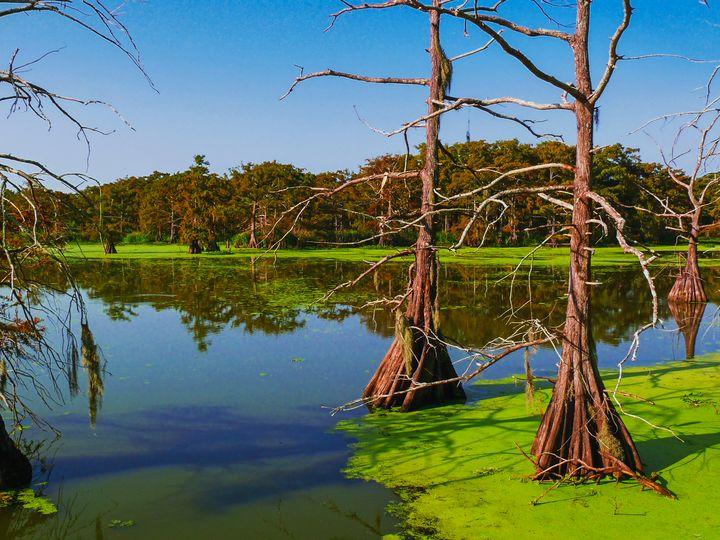 Marshes of Wallisville - Robert Brown Photography