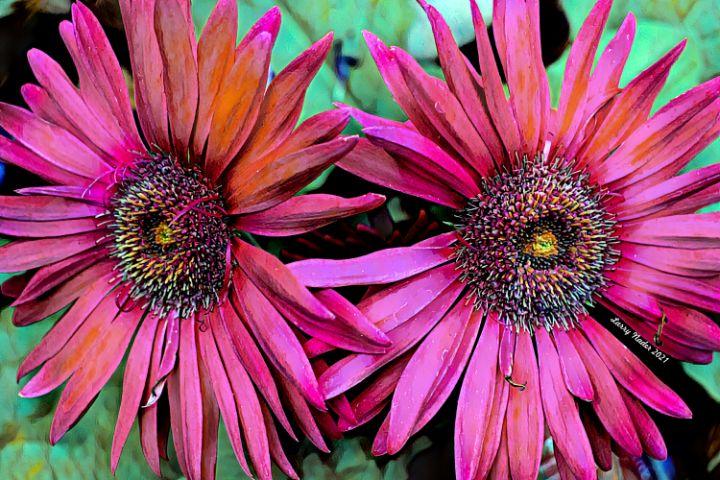 Dual Rose Gebera With Light Eye - Larry Nader Photography & Art