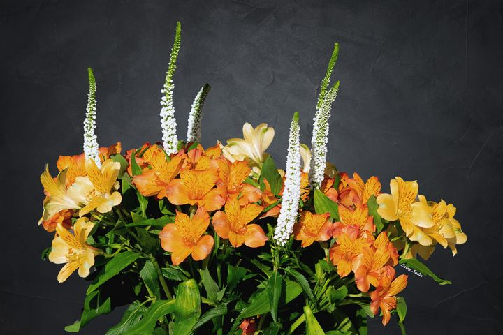 White Wands in Alstroemeria - Larry Nader Photography & Art