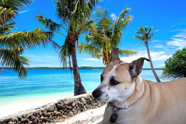 Beach Dog - Larry Nader Photography & Art