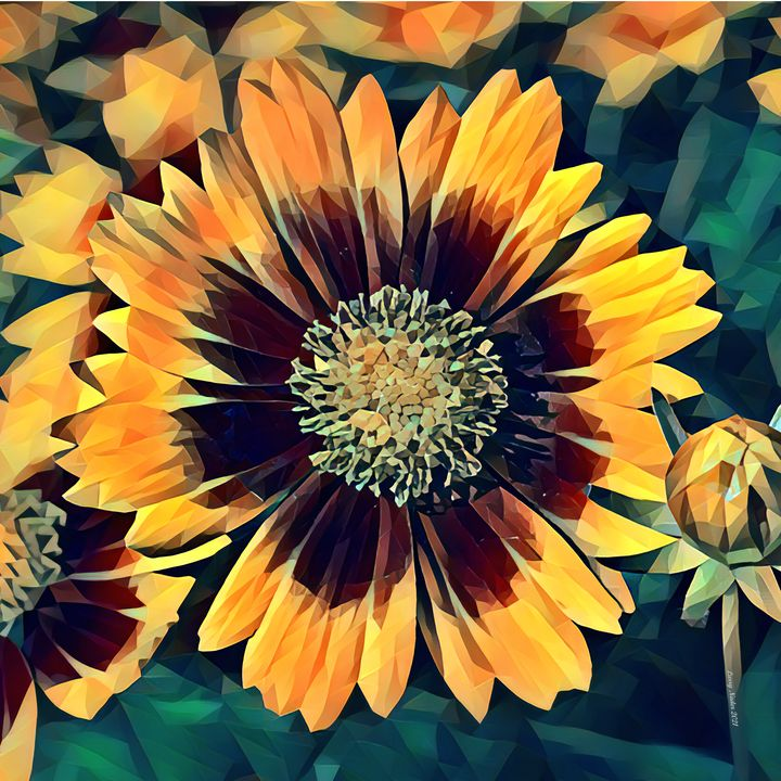Gold and Bronze Coreopsis in Poly - Larry Nader Photography & Art