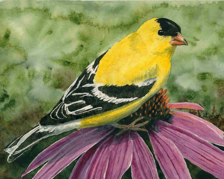 American Goldfinch - Patagonia Watercolors