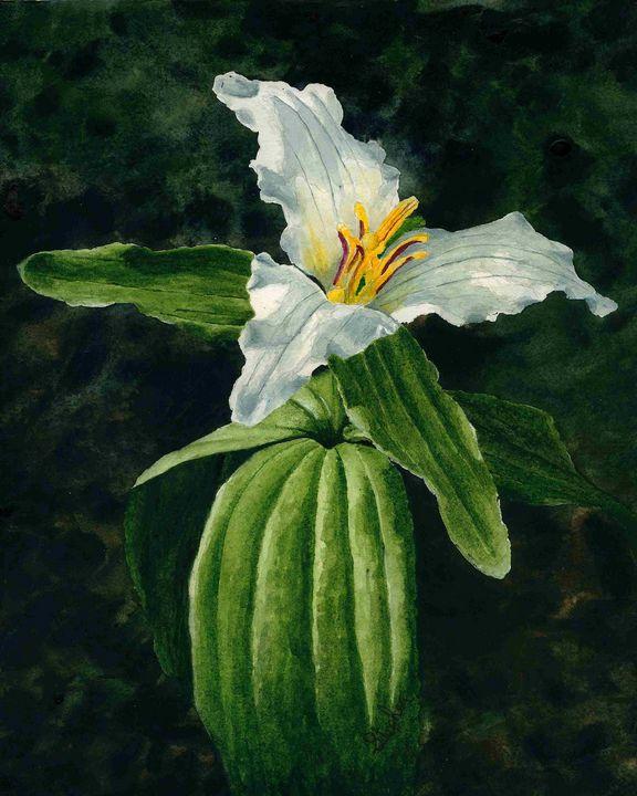 Trillium - Patagonia Watercolors