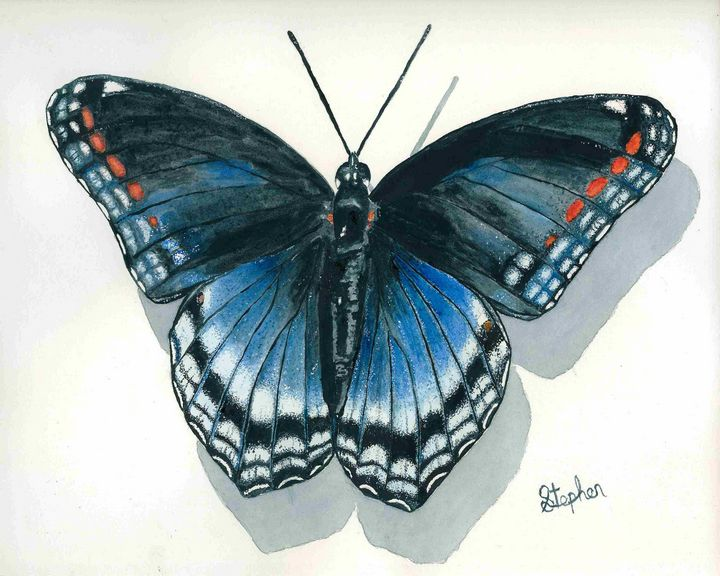 Red-spotted Purple Admiral - Patagonia Watercolors
