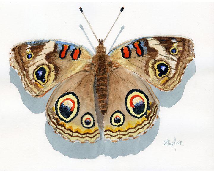 Buckeye Butterfly - Patagonia Watercolors