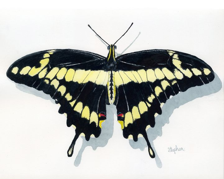 Giant Swallowtail Butterfly - Patagonia Watercolors