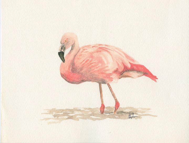 Chilean flamingo - Patagonia Watercolors