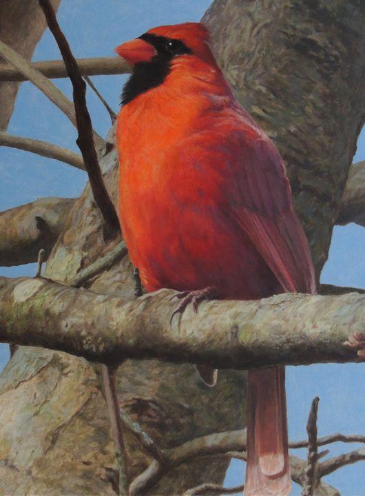 Cardinal Pride -  Astraljv