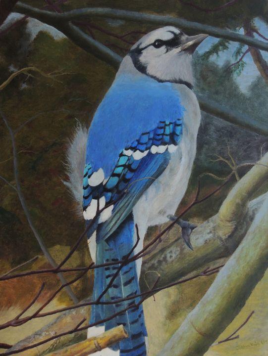 Blue Jay on Branch -  Astraljv