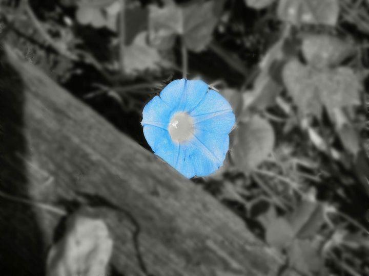 Blue Flower - Paintings