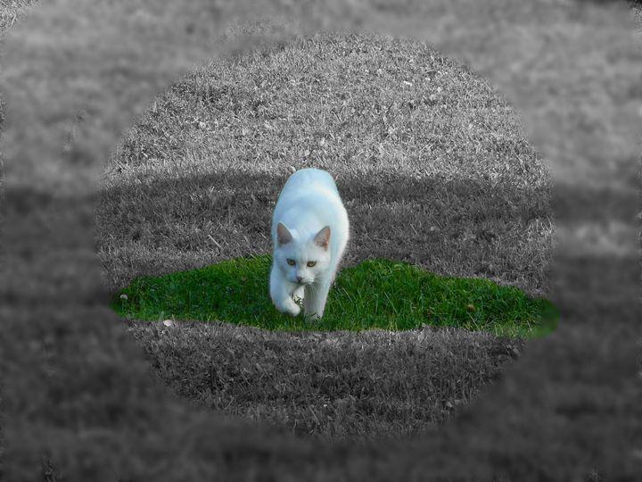 Stalking Cat - Paintings