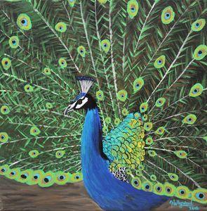 Peacock, 2018