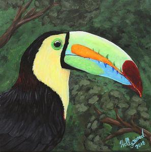 Keel-billed Toucan, 2018