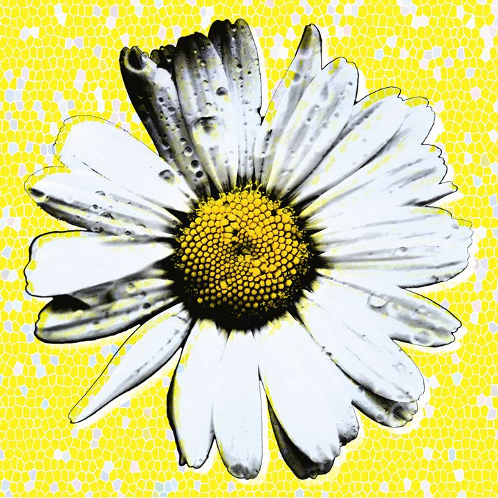 Yellow Daisy - Jonathan Price