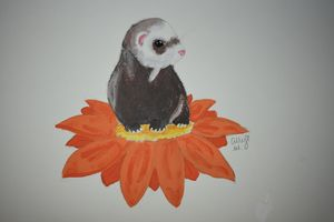 Orange Flowered Ferret
