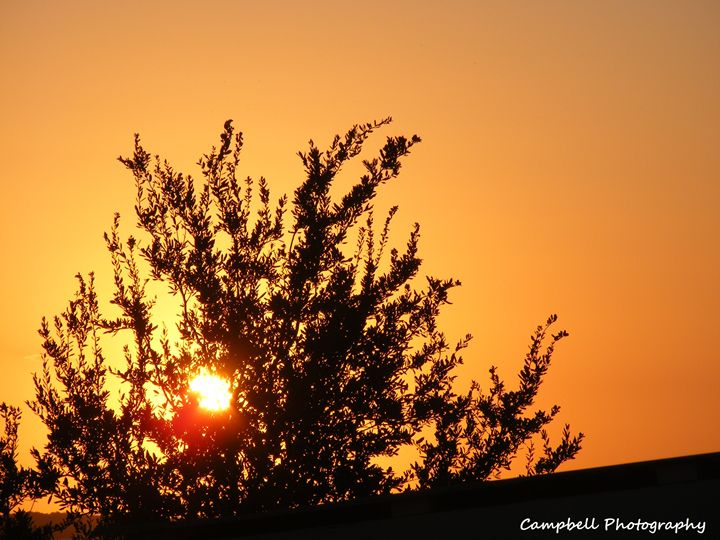 Mesquite Sunset - Campbell Photography