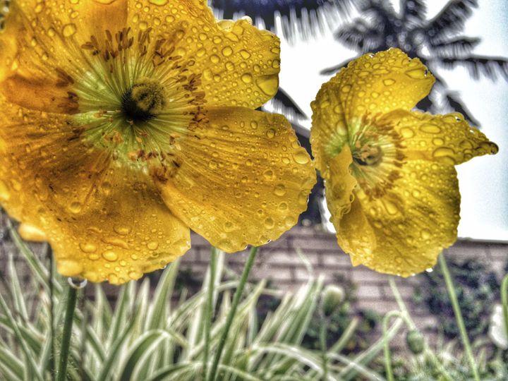 FlowerThirst - SeaAwake