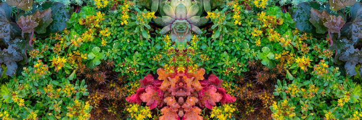Plant pattern. - Alex Popov