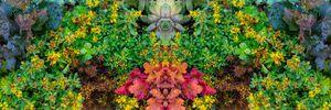 Plant pattern.