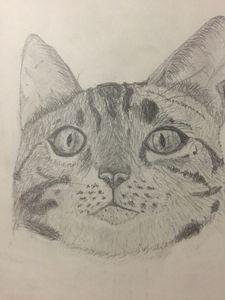 Avadour The Cat