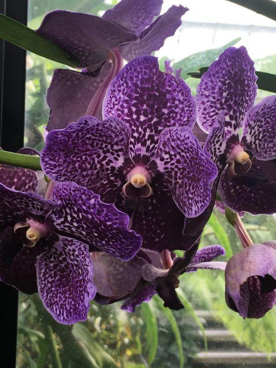 Violet - Design