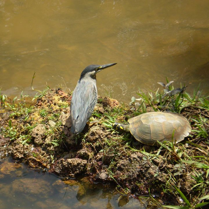 Bird and turtle - Hermes Cavalcante