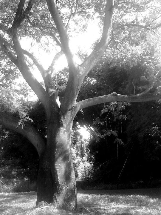 Tree Black and white - Hermes Cavalcante