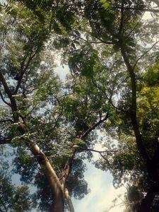 Tree in a blue sky
