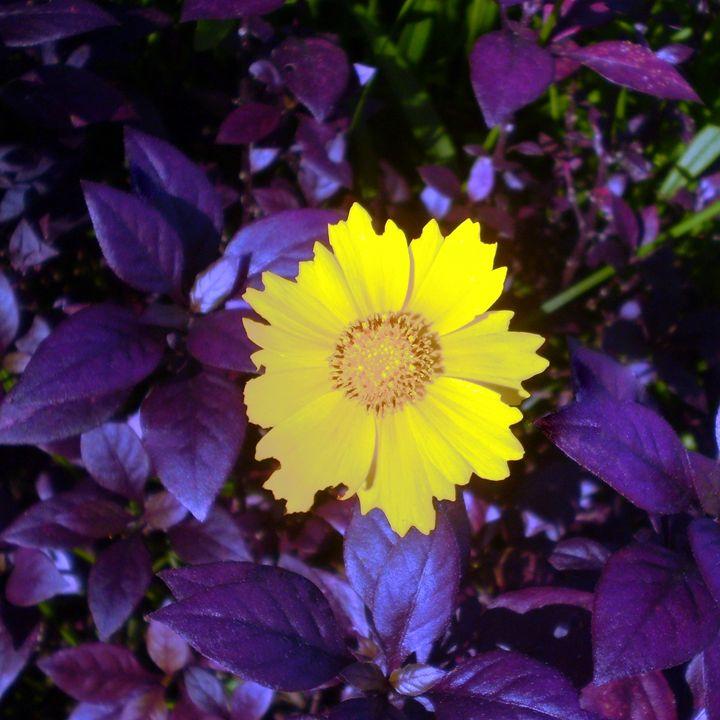 Urban Flower - Hermes Cavalcante