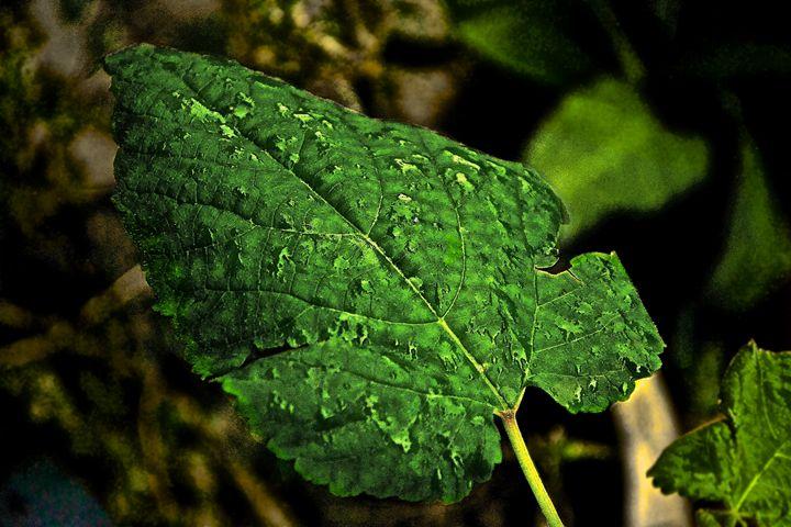 Leaf - J. R. Zapala