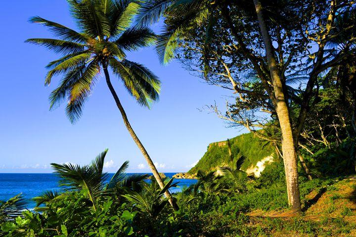 Palm Trees - J. R. Zapala