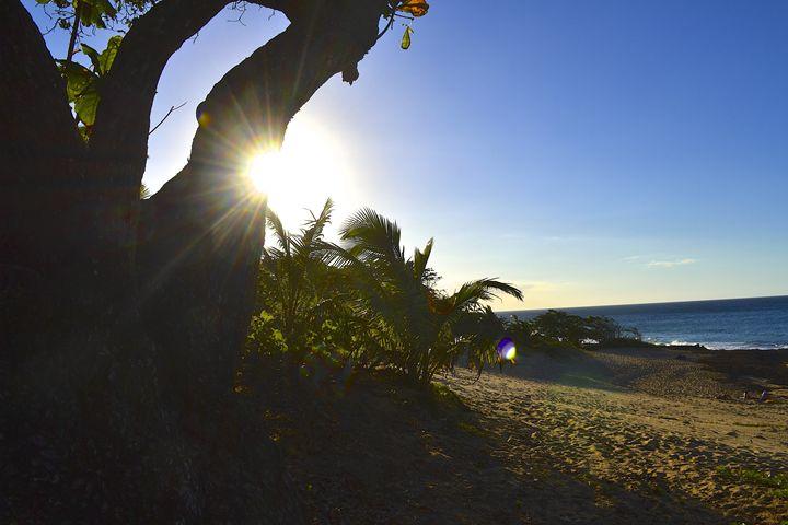 Sea Tree - J. R. Zapala