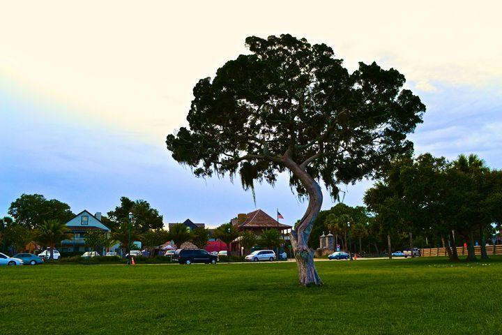 Living Tree - J. R. Zapala