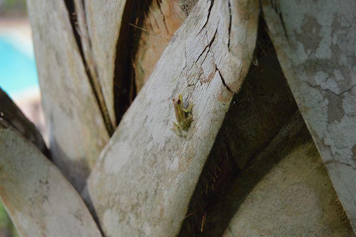 Frog. - UpendoSanaa