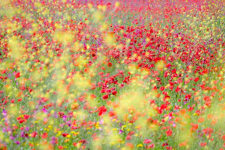 Spring meadow - Luca De Siena - Nature Photography