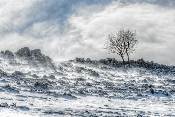 Two against the storm - Luca De Siena - Nature Photography