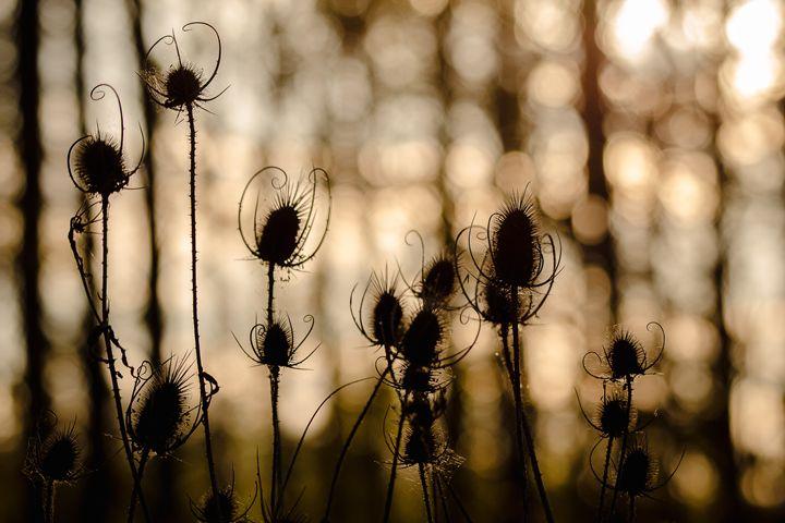 Shadow play - Luca De Siena - Nature Photography