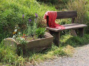 Rustic bench near pathway