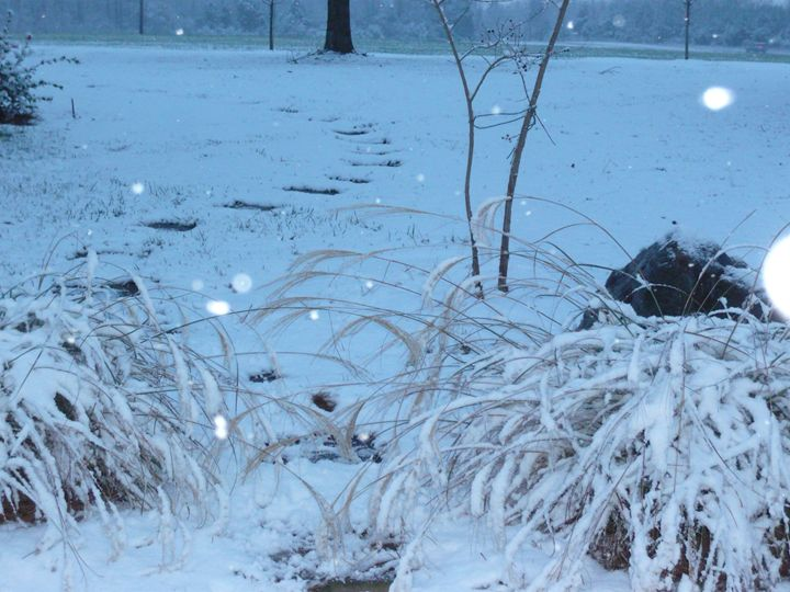 Winter Path - VampCat Arts