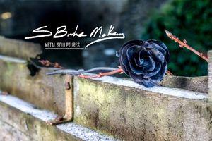 Roses - Steve MacBurke