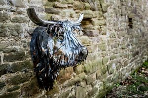 Stuart, la vache Ecossaise - Steve MacBurke