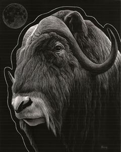 Musk Ox and Moon - Nathan Perry Fine Art